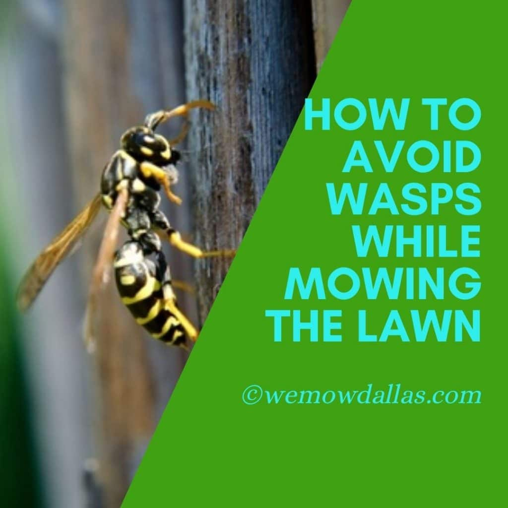 How To Avoid Wasps While Mowing The Lawn