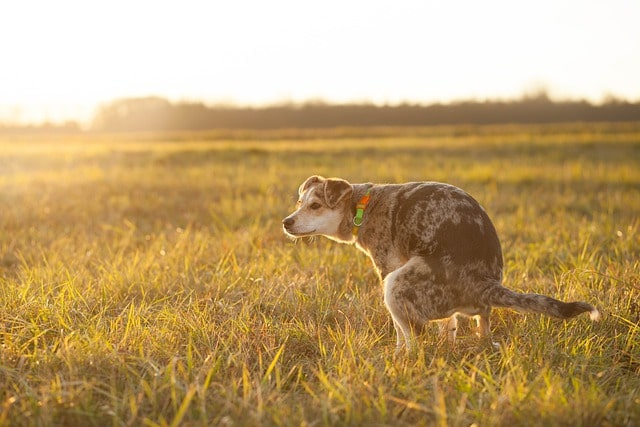 How To Remove Dog Urine Smell From Lawn