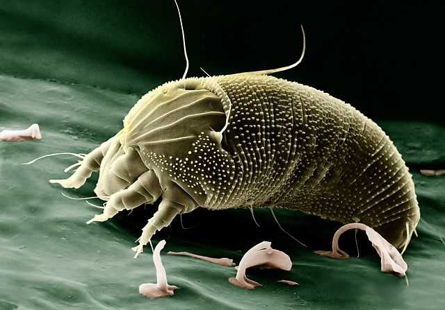 How To Tell If You Have Lawn Mites