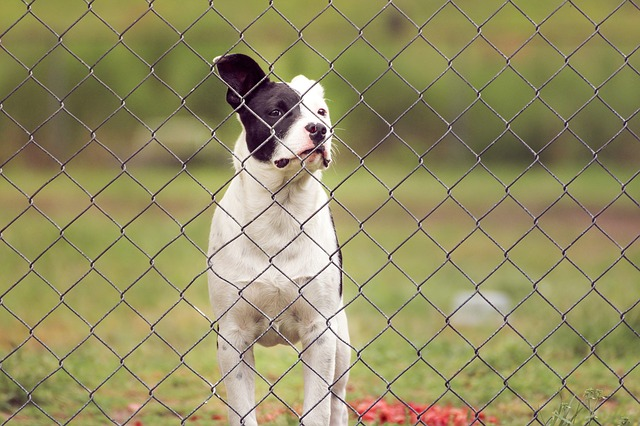 Cheapest Way to Fence a Yard for Dogs