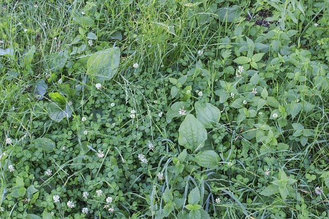 How to Avoid Weeds in Lawn