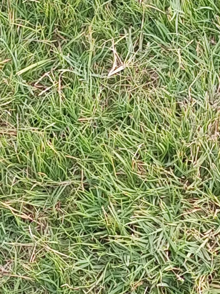 how to treat thatch in lawns