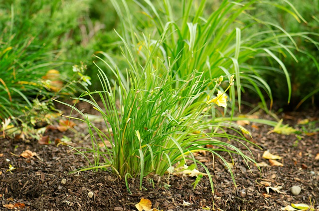 How to Stop Erosion in Your Yard