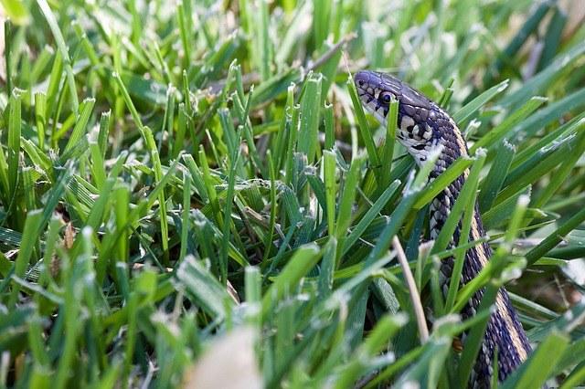 best way to keep snakes out of yard