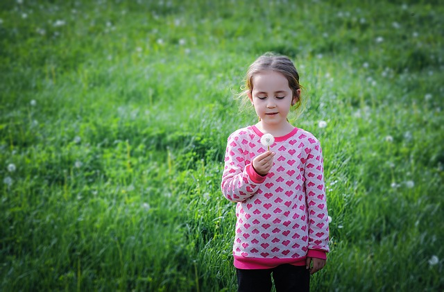 How to Clear Dandelions from Lawn