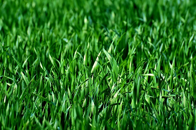 How to Accelerate Lawn Growth
