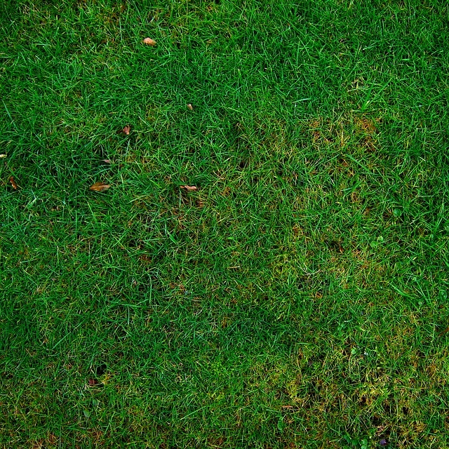 How to Lower Phosphorous in Lawn