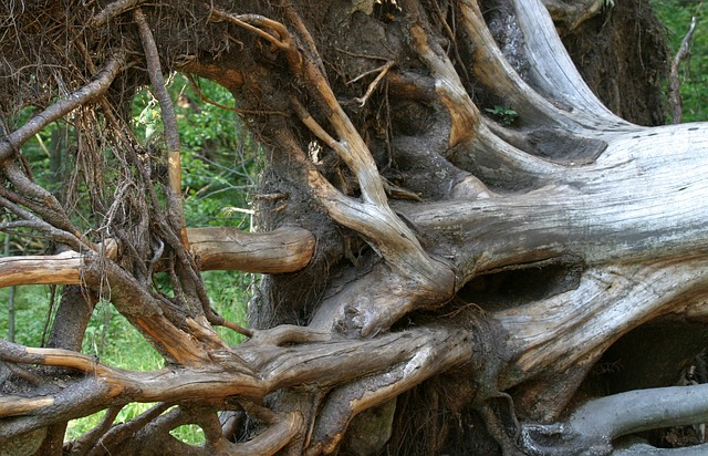 How to Stop Tree Roots From Growing Back