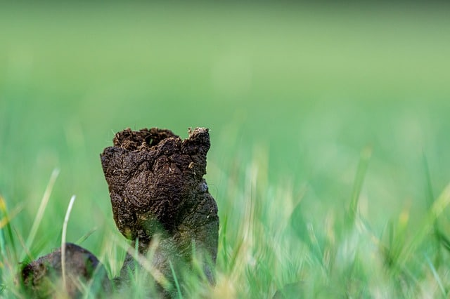 Best Way to Pick up Dog Poop in Grass
