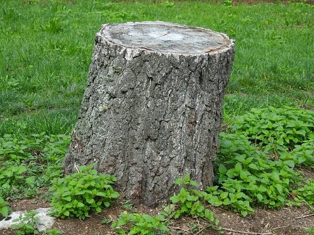 killing tree stumps with motor oil