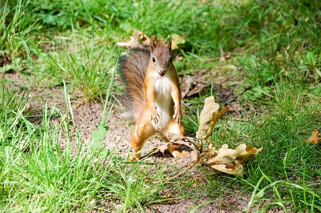 Can I Shoot Squirrels in My Yard