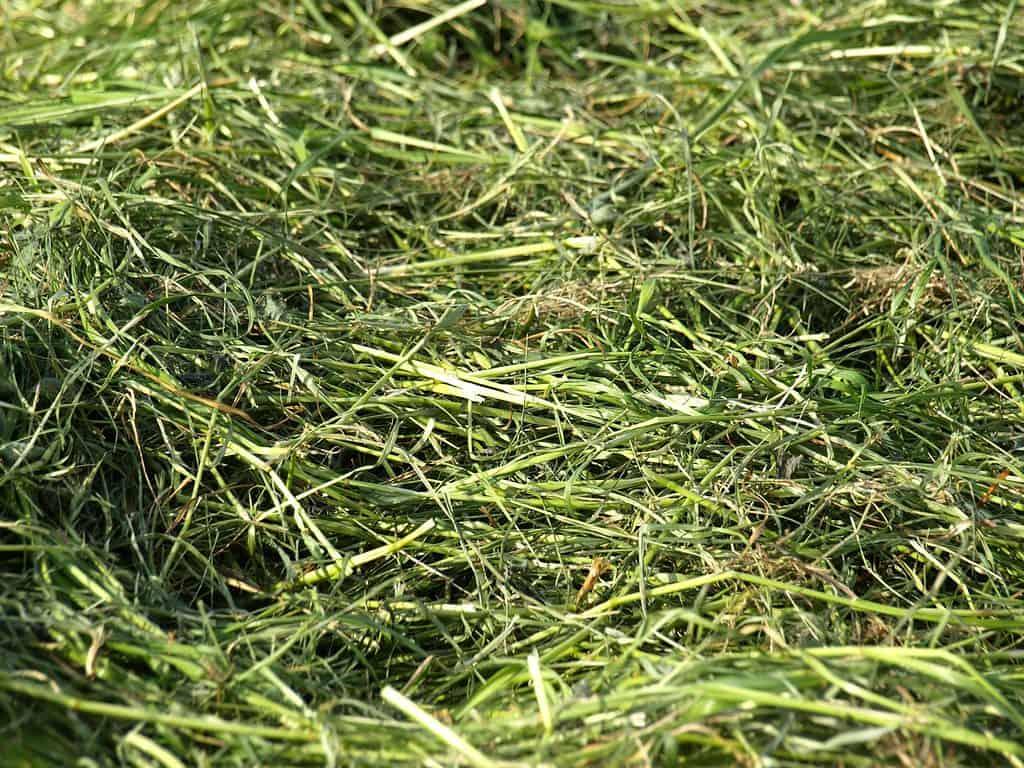 do grass clippings make good mulch
